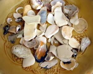 Cream - seashells