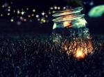 fireflies-two