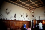 Elk Antlers in Entrance Hall