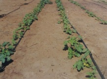 During our stay, we learned a lot about irrigated agriculture.