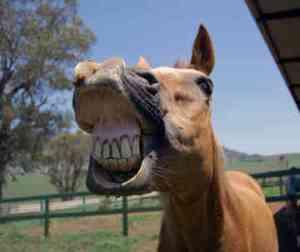 australian-stock-horse-0008-2